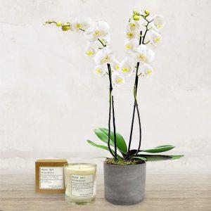 Orchidea Bianca Extra<br> & Candela artigianale