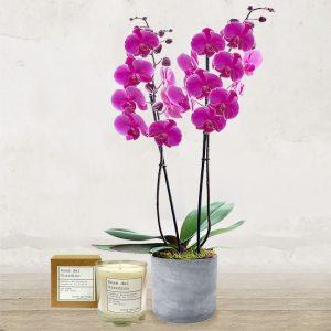 Orchidea Rosa & Candela artigianale